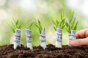 Planting Money Plants