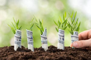 Planting Money Plants